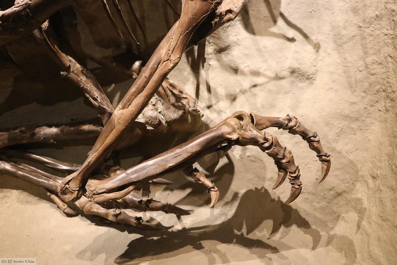 dinosaur feet fossil