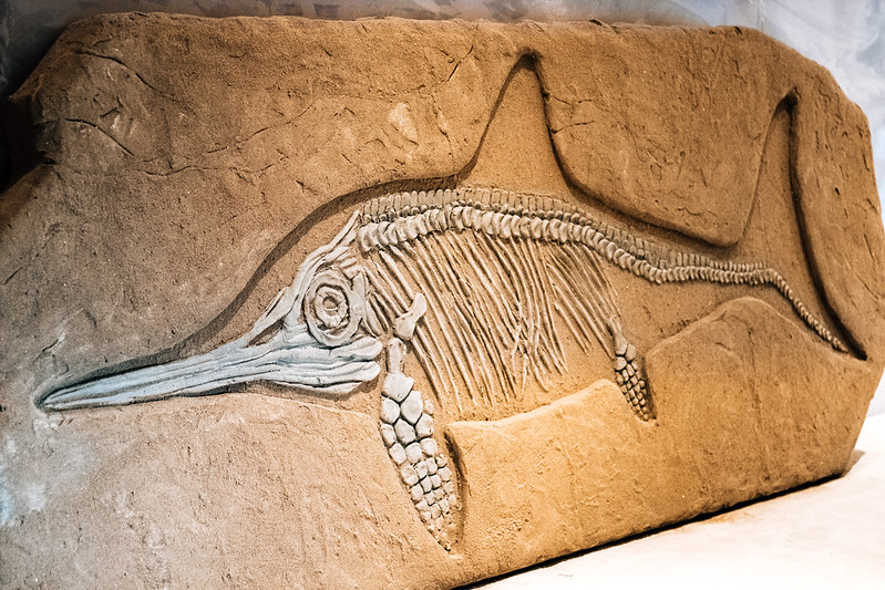 dinosaur fish fossil