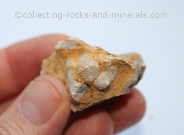 sedimentary rock fossils